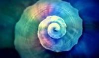 Managing Zen organizzazione aziendale